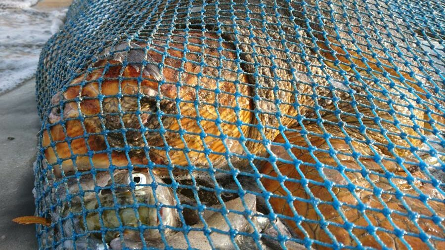 Loggerhead turtle caught as bycatch, Oman. The turtle was successfully released back into the ocean. ©Zoe Cox