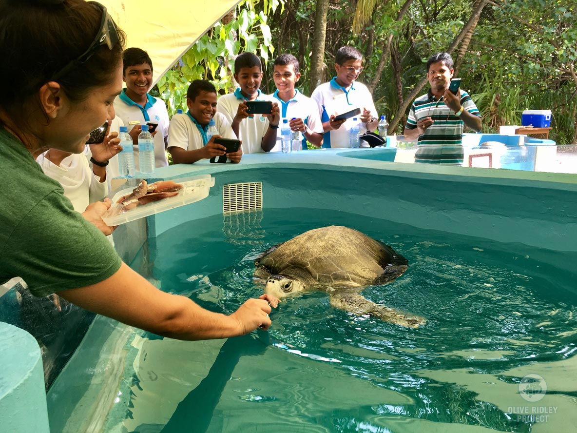 Turtle patient being fed at Marine Turtle Rescue Centre