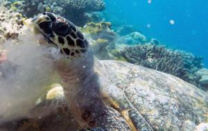 Fishy, hawksbill turtle